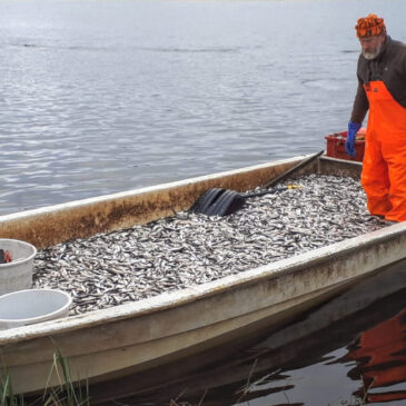 Tule Luosujärvelle narraamaan kaloja!